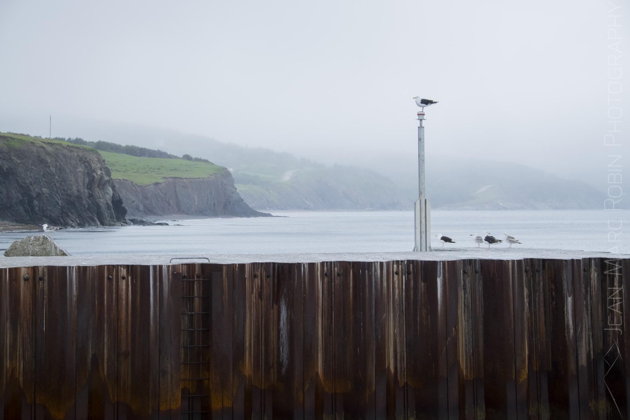 Cold Sea Gulls
