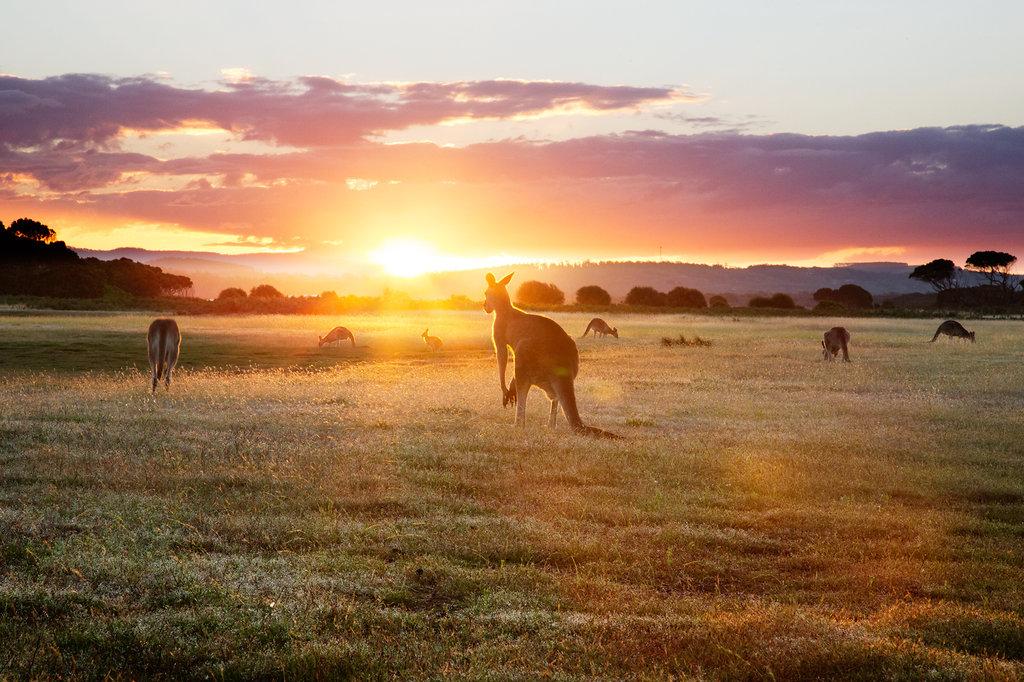 Kangaroo Sunset